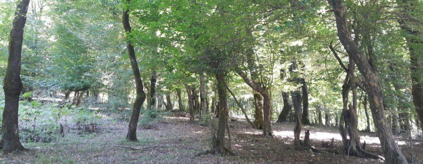جنگل های انجیلی ماناسلوتور (11)