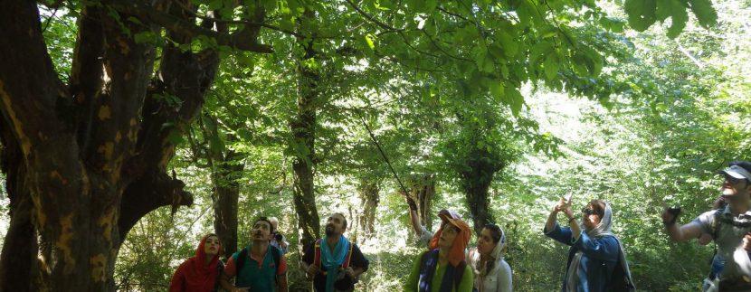جنگل های انجیلی ماناسلوتور (7)
