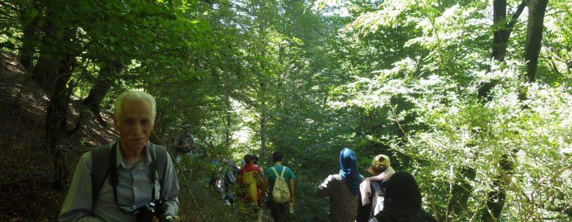 جنگل های انجیلی ماناسلوتور (8)
