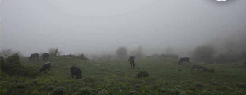 ور طبیعتگردی چشمه پراو - تور ارفع ده - تور ماناسلو - طبیعتگردی تور جنگل ارفع تور طبیعتگردی تور دوچرخه سواری4