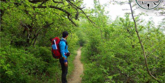 جنگل ارفع ده تا چشمه پراو