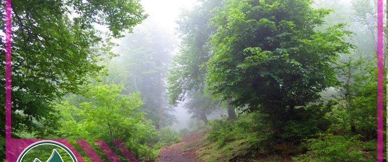 عکسهای سفر جنگل لاکمر - تور طبیعتگردی - تور دوچرخه سواری - تور کوهنوردی - طبیعتگردی ماناسلو - تور یکروزه - تور دوچرخه دو روزه (8)