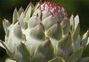 گیاهان دارویی- قسمت اول