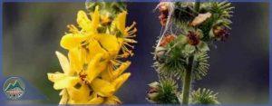 گیاهان دارویی- قسمت سوم