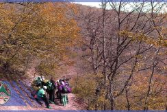 تور طبیعت گردی جنگل های انجیلی ماناسلو (1)