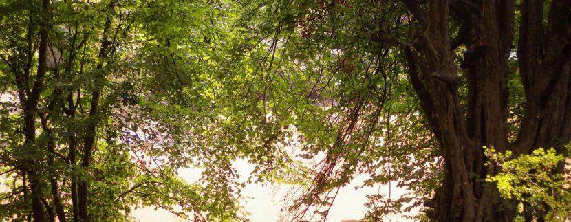 تور مرداب هسل گروه گردشگری ماناسلو www.manaslo (12)