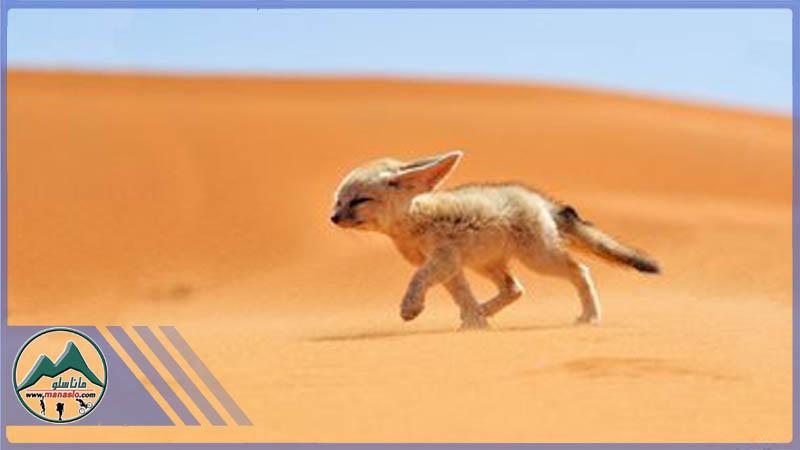 تور کویر مصر گروه گردشگری ماناسلو www_manaslo_com (1)